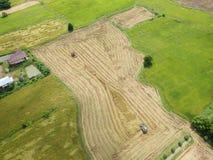 Tractor het drijven over padieveld bij de oogst Royalty-vrije Stock Fotografie