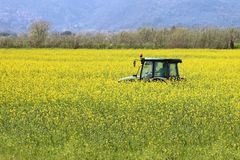 Tractor inside yellow canola field Stock Image