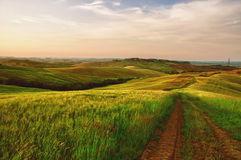 Tractor lines in a green field in Tuscany Royalty Free Stock Photos