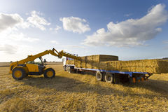 Tractor loading straw bales onto truck in sunny rural field Royalty Free Stock Photography