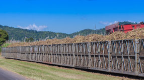 Tractor Loading Sugar Cane Onto Train Bin Stock Images