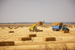 Tractor loads dry haystacks on to the trailer Royalty Free Stock Image