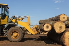 Tractor with logs. In a plantation forest industry Stock Photography