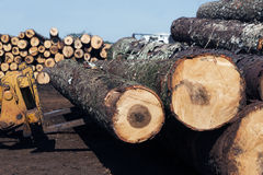 Tractor with logs. In a plantation forest industry Royalty Free Stock Photography