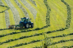 The tractor moving the grass on the field Stock Photos