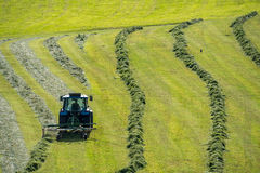 The tractor moving the grass on the field Stock Images