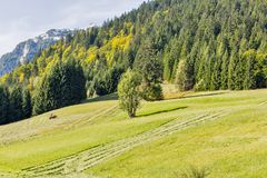 Tractor mowing grass on an alpine lawn royalty free stock images