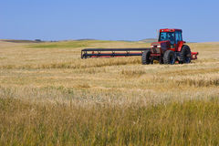 Tractor Mowing Wheat. Under a clear blue Alberta sky, a red tractor and mower cuts golden wheat Royalty Free Stock Photography
