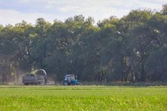 Tractor mows the grass Stock Image