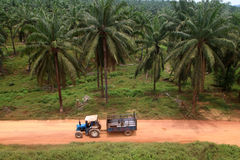 Tractor  in oil palm plantation - Series 5 Stock Photography