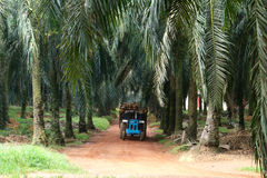 Tractor  in oil palm plantation - Series 2 Stock Photography