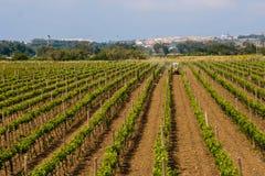 Tractor op de wijngaard Stock Afbeelding