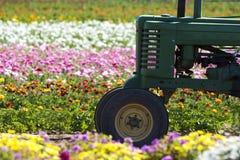 Tractor op gebied van bloemen Stock Fotografie
