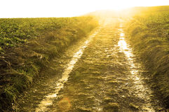 Tractor paths and fields in France Royalty Free Stock Photos