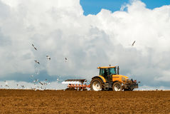 Tractor with plow and seagull Stock Image