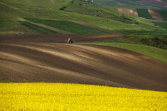 A tractor plow soil in spring and an golden field of flowering r Stock Images