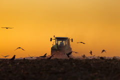 Tractor Plowing in dusk on sunset with crows Stock Photos