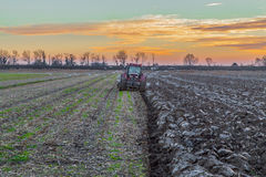 Tractor plowing field. Agricultural landscape with fresh plowed field, seasgulls, and suneset in the background Royalty Free Stock Photo