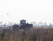 Tractor plowing a field and crows flying around him in search of food Stock Image