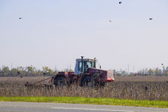 Tractor plowing a field and crows flying around him in search of food Royalty Free Stock Images
