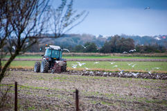 Tractor plowing a field. Followed by seagulls Stock Photo