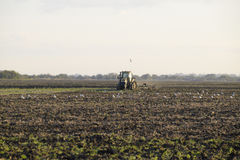 Tractor plowing plow the field. Tilling the soil in the fall after harvest. The end of the season Royalty Free Stock Photography