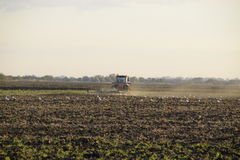 Tractor plowing plow the field. Tilling the soil in the fall after harvest. The end of the season Royalty Free Stock Images