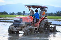 Tractor plowing a rice field in Chiang Mai, Thailand on August 0 Royalty Free Stock Images