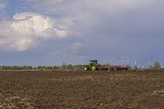 Tractor plows the field. A flock of birds circling over the field.  stock image