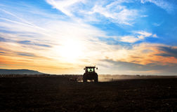 Tractor plows a field in the spring accompanied by rooks Tractor. Sunset Stock Photo