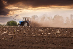 Tractor plows a field in the spring against a beautiful sunset sky. The tractor plows the field in the spring, and behind it the dust rolls and birds fly to find Stock Image