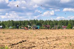 A tractor plows the field on a Sunny day. Rural spring landscape. Flocks of birds follow directly behind a tractor, plowing the field. They find countless worms Royalty Free Stock Images