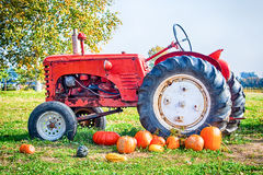 Tractor and plumpkins. An old vintage red farm tractor in a field with orange pumpkins Royalty Free Stock Images