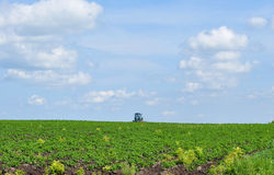Tractor in a potato field Royalty Free Stock Image