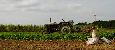 Tractor potatoe harvest Royalty Free Stock Image