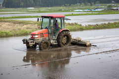Tractor Prepares Rice Paddy Stock Images