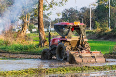 Tractor Prepares Rice Paddy, Agriculture In Thai Royalty Free Stock Photo