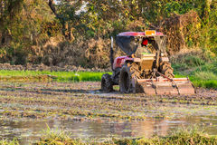 Tractor Prepares Rice Paddy, Agriculture In Thai Royalty Free Stock Photos