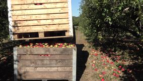 Tractor put wooden box full of apple harvest on another box. 4K stock footage