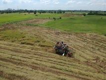 Tractor que conduce sobre campo del arroz en cosecha Imágenes de archivo libres de regalías