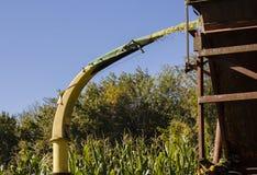 Tractor que cosecha maíz Imagen de archivo libre de regalías