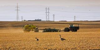 Tractor que siembra en primavera Imagen de archivo