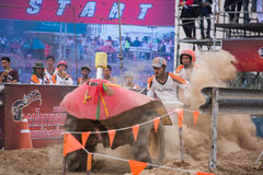 Tractor racer racing in Kubota mud track Stock Photos