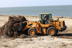 Tractor removes algae on a beach Stock Photo