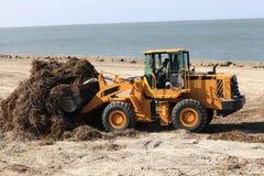 Tractor removes algae on a beach Stock Photo