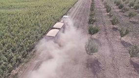 Large truck transport grain from the field. Aerial view. The tractor removes the harvested crop of grain from the field. Transportation of cargo, agricultural stock video footage