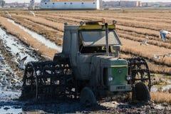 Tractor in the rice field in Ebro Delta Stock Photo