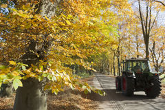 Tractor on road under colorfull leaves of trees in the fall Royalty Free Stock Images