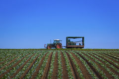 Tractor. With rows of sapplings Stock Photography