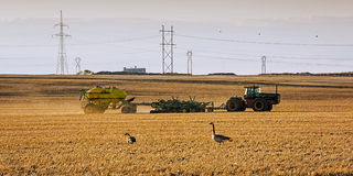 Tractor Seeding in Spring Stock Image